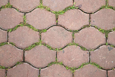 Texture of pavement tile with small grass in between 스톡 콘텐츠
