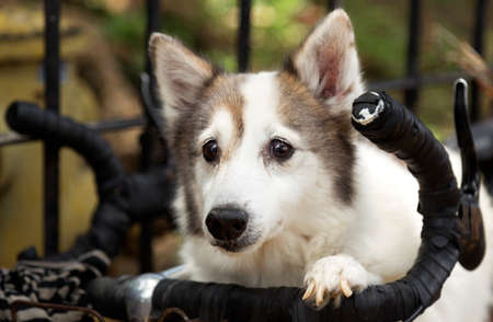 Small cute dog on a bicycle, close up