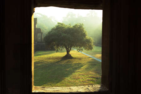 Sunrise in Angkor Wat temple complex, tree in beautiful morning light, Siem Reap, Cambodia
