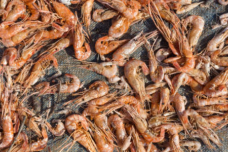 Dried red shrimps prawns texture background macro close up