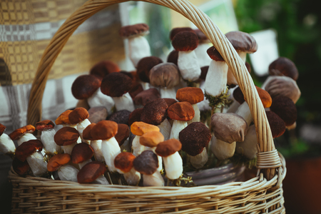 bag full of artificial mushrooms Stock Photo
