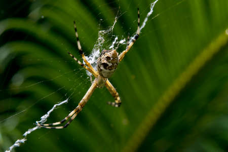 net: Spider waiting for prey in its own net Stock Photo