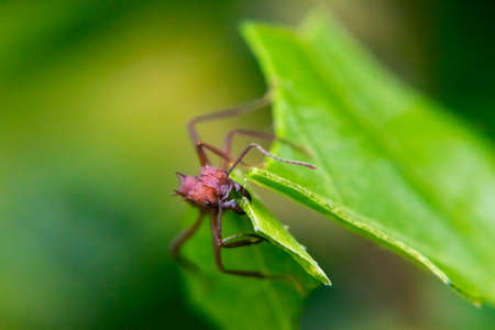 probes: Red ant cutting a leaf