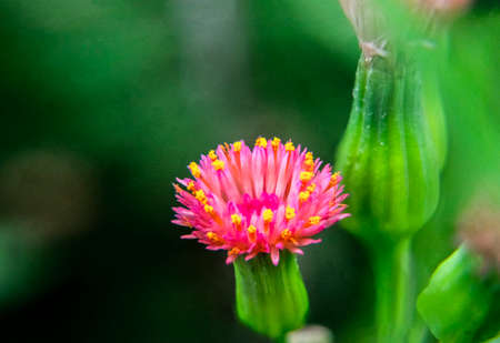 Small purple flower with pollen in stamen