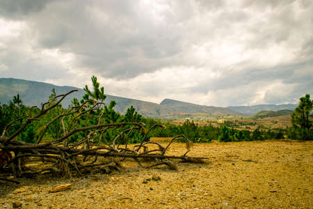 Dead tree on dry land and forest with clouds Stock Photo