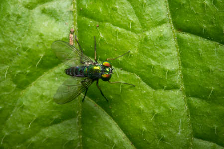 Tiny green fly on a leaf
