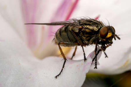 photographies: Fly insect on a magnolia flower