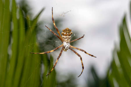 Wild spider waiting for prey in the forest Stock Photo