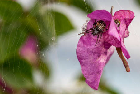 eight legs: Pink flower petal trapped on a spider web Stock Photo