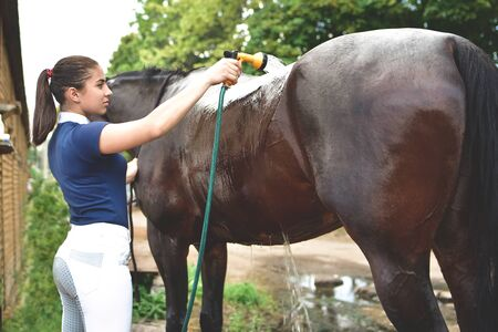 The process of washing the horse with water from a hose, preparing for the competition. recreation Reklamní fotografie