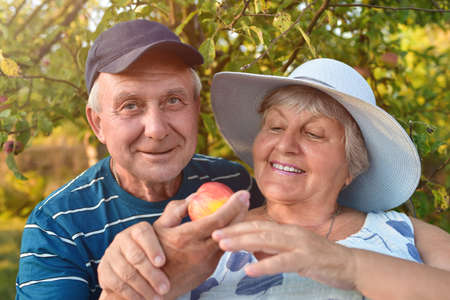 People smiling and picking apples. Happy old couple. From seeds to fruits. Stockfoto