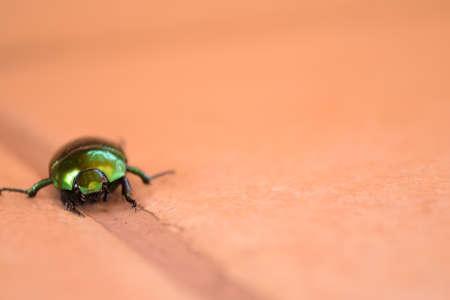 goblin: The little tiny green bug gloden goblin
