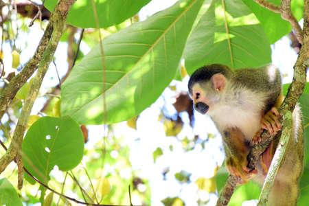 pillage: Monkey Mamma
