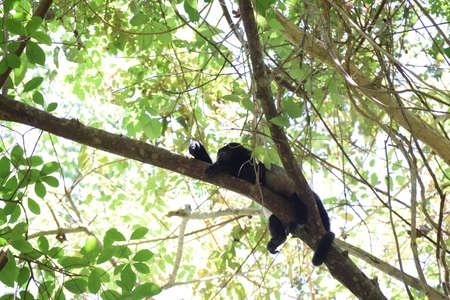 pillage: The lazy monkey