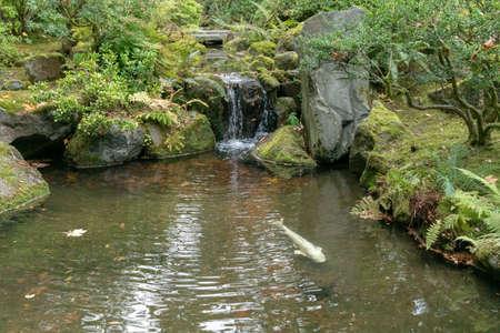 Portland, Oregon - 2018-11-20 - Fish pond and fountain at japanese tea garden in Portland