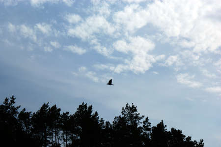 a free bird flies on the blue sky and trees