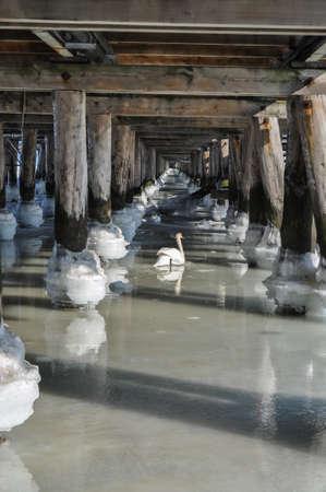 frozen sea ocean water under the bridge pier balls poles in a row and white swan