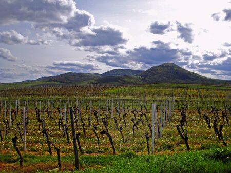 enclave: idyllic vineyard in autumn Stock Photo