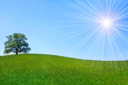 Lonely tree on a green meadow with blue cloudless sky and shining sun
