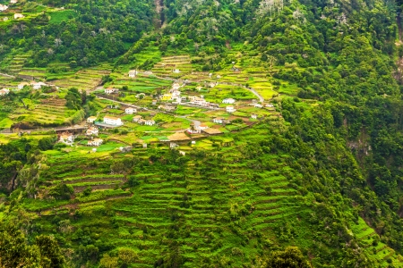 Cultivated terraced hill on a cliff on the island of Madeira  Stock Photo