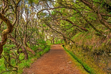 Irrigation canal levada in magical forest, Madeira Island, Portugal