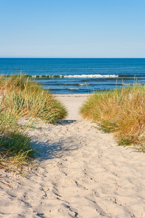 beach access, pathway to the baltic sea with marram grass aside