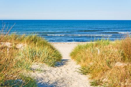 acceso a la playa, camino del mar Báltico con vegetación de playa a un lado Foto de archivo