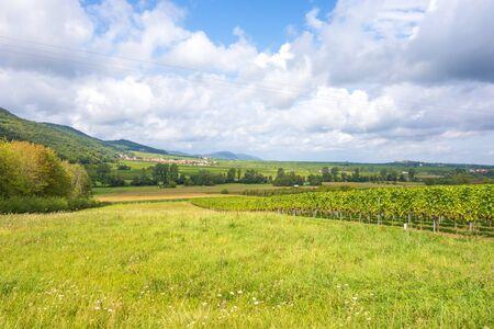 biological vineyard: near the vineyards somewhere in rhineland-palatinate, germany