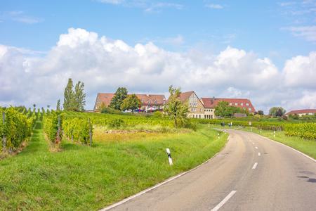 biological vineyard: on the Weinstrasse somewhere in rhineland-palatinate, germany