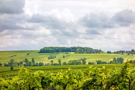 biological vineyard: in the vineyards somewhere in rhineland-palatinate, germany Stock Photo