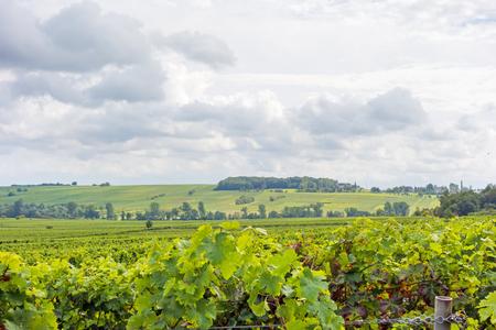 somewhere: in the vineyards somewhere in rhineland-palatinate, germany Stock Photo