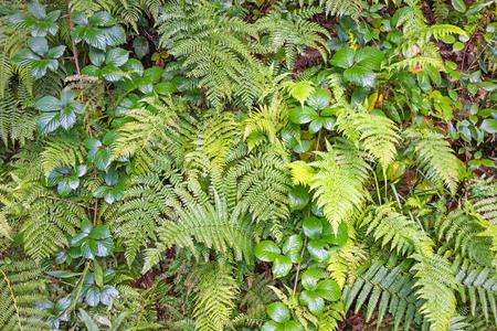 Ferns leaves green foliage tropical .