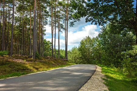 bikeway: Bike cycle way through the forest along the Brombachsee Stock Photo
