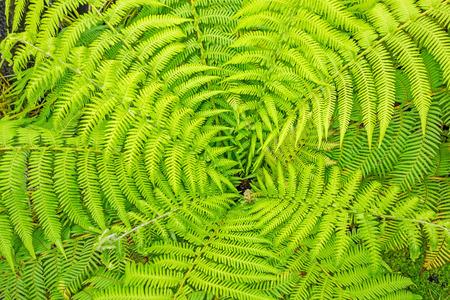 fresh green fern leaves