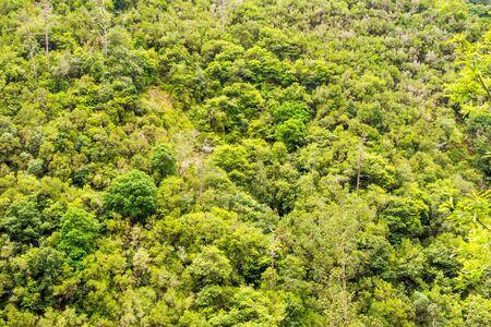 feuille arbre: For�t - d�tail  gros plan de la cime des arbres dans la for�t tropicale, de loin