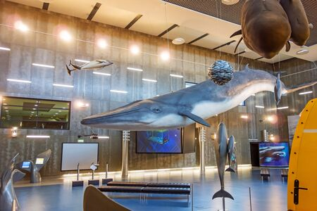baleine bleue: Canical, Portugal - June 5, 2013: Museu da Baleia (Whale Museum). Huge blue whale model hanging from ceiling. The museum documents the history of whale hunting on Madeira. �ditoriale