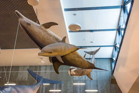 whaling: Canical, Portugal - June 5, 2013: Museu da Baleia (Whale Museum). Swimming dolphins. The museum documents the history of whale hunting on Madeira.