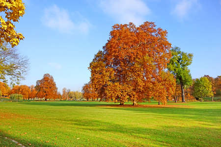 treetops: Colorful autumn landscape - vibrant trees in park, blue sky