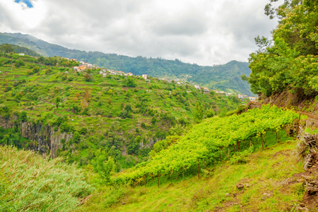 dropoff: Terraced hill crest in the north-east of Madeira - fresh green vineyard at hillside in the foreground Stock Photo