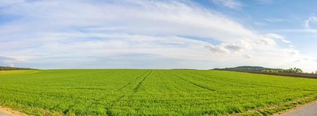 Farmland panorama - green wheat field, rural landscape Stock Photo