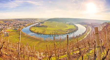 loop: Neckar loop in Hessigheim - panorama in the vineyards