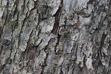 Texture of Old Dry Tree (Apple-tree) Bark Stock Photo
