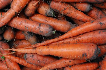 A Head of Gathered Carrots with Mud Stock Photo