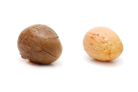 Brown Avocado Seed Closeup Isolated on White Standard-Bild