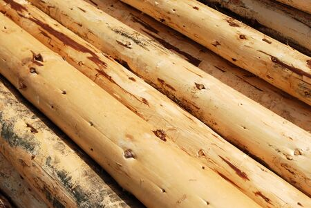 Wood Lumber Heap of Pine Tree Uncorked Logs