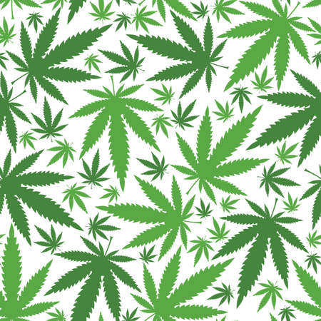 green leafs: Marijuana leaves