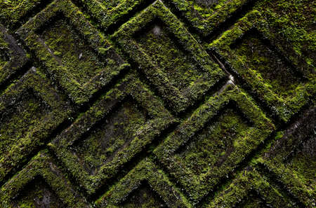 Old textured brick wall completely covered in moss Stok Fotoğraf