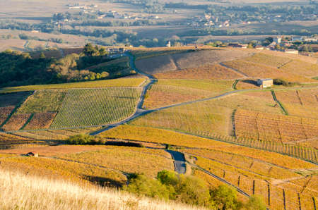 The famous vineyard of Chiroubles at the sunset, Beaujolais, France Stock Photo