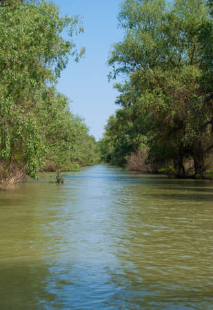 danube delta: Vegetation paradise in Danubes Delta durring summer