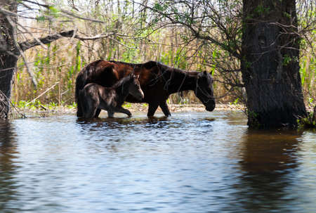 danube delta: two young wild horses in Danube Delta Stock Photo